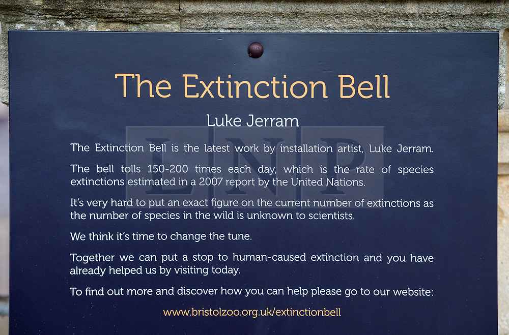 © Licensed to London News Pictures. 22/11/2019. Bristol, UK. The Extinction Bell with artist LUKE JERRAM, his latest artwork which was installed at Bristol Zoo Gardens today. The brass bell chimes 150-200 times each day, which is the rate of species extinctions estimated in a 2007 report by the United Nations. The aim of the bell is to give people an audible representation of how often species are being lost and to raise awareness of the issue of biodiversity loss which is happening across the world every day caused by humans. Bells are used as a universal call to action and communicate a sense of emergency, and often as a sign that someone has died. As part of the launch, bells across Bristol are due to chime in support of the Extinction Bell on the afternoon of Friday November 22. Luke Jerram was keen to work with Bristol Zoological Society as they recognise the value of both animal and plant species and it allowed the opportunity to present the artwork to the public and get feedback about its impact. The bell will remain at the heart of Bristol Zoo Gardens until after the New Year before it tours museums of natural history, botanic gardens and other zoos around the globe. Photo credit: Simon Chapman/LNP.