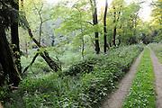 Polenztal, Waldweg, Elbsandsteingebirge, Sächsische Schweiz, Sachsen, Deutschland.|.Polenz Valley, Saxon Switzerland, Saxony, Germany