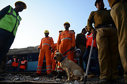 November 20, 2016 - Pukhrayan, Kanpur, India - Indian resuers of NDRF team with a rescue dog squad  performs rescue work  near of derailed Indore Patna Express train, in Pukhrayan village, some 60 kms from Kanpur, on November 20,2016. More than 150 people died in Accident, According to officials. (Credit Image: © Ritesh Shukla/NurPhoto via ZUMA Press)