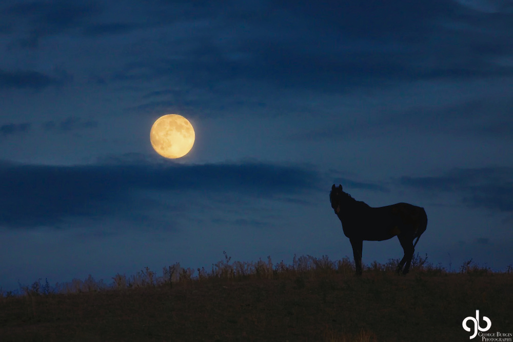 I was traveling south of Clyde Park, Montana when I saw this horse seemingly dancing with the moon.