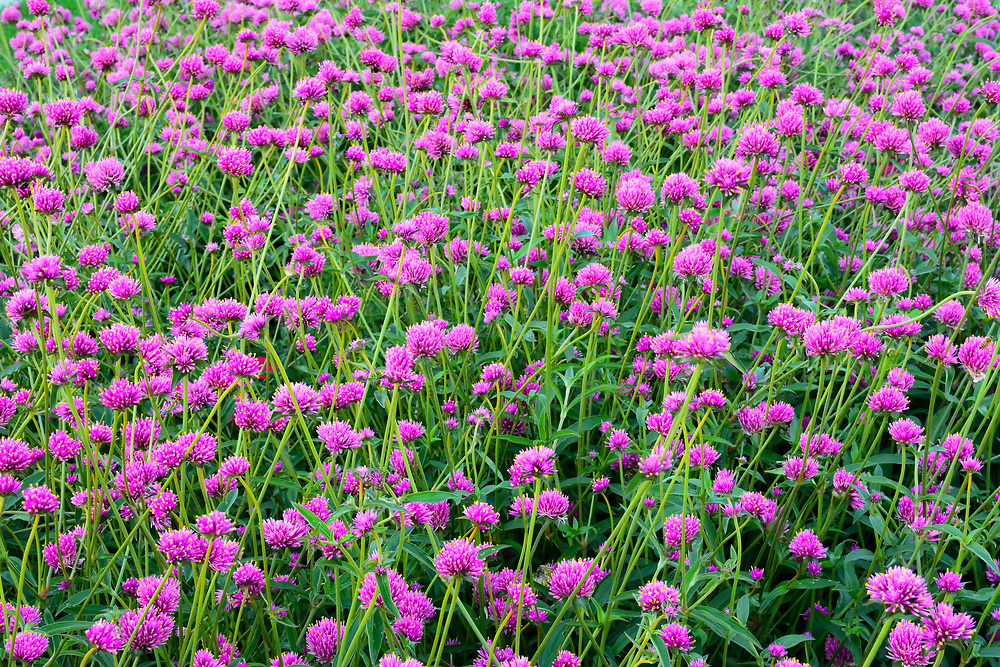 This is a picture of a field of flowers.<br /> <br /> Camera <br /> NIKON D7100<br /> Lens <br /> 17.0-50.0 mm f/2.8<br /> Focal Length <br /> 50<br /> Shutter Speed <br /> 1/40<br /> Aperture <br /> 16<br /> ISO <br /> 1600