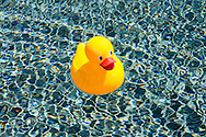 Rubber Duck, Swimming pool,  Sagaponack, NY