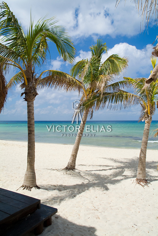 Palm trees on the beach..Cozumel, Q.Roo..Mexico.