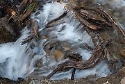 Water streams over wood branches on the Pacific Crest Trail between Rainy Pass (on Highway 20) and Cutthroat Pass, Okanagon National Forest, Washington, USA.