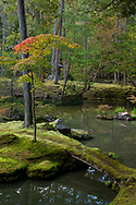 A splash of autumn colour on an acer tree above a moss covered bridge to an island in the Saiho-ji Garden (Temple of Moss) Kyoto, Japan