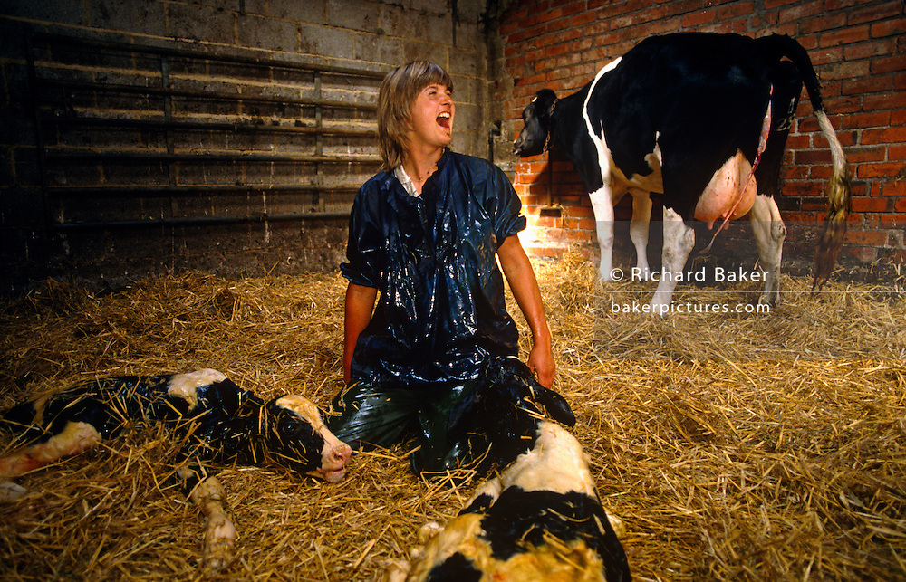 Female vet, Diana Stapleton is ecstatically happy after successfully delivering twin calves to Fresian cow at Manor House Farm, Barnoldswick near Settle, North Yorkshire, England. With the two youngsters spread on the soft straw of the barn, and their mother facing the corner of the outhouse with the resulting afterbirth still attached, Diana makes her sense of achievement clear to the farmer who must also be relived about the positive outcome. The survival of twin cattle births depends on thorough training and an instinct for animal husbandry and medical requirements. Diana Stapleton belonged to the Dalehead Veterinary Group based in nearby Settle for 15 years, covering a 20-mile area of 500 remote farms though she specialised in small animals and farmwork before dying suddenly at the age of 39.