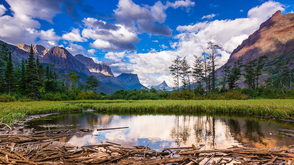 Driftwood and pond, Saint Mary Lake, Glacier National Park, Montana