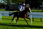 Mojave ridden by Adam McNamara and trained by Roger Charlton in the Sds Aqua-Xchange Novice Stakes race.  - Ryan Hiscott/JMP - 14/09/2019 - PR - Bath Racecourse - Bath, England - Race Meeting at Bath Racecourse