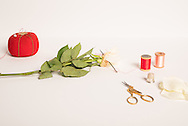 Still life photo sewing back together a white rose. 7.10.16
