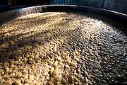 Ouro Verde de Minas_MG, Brasil.<br /> <br /> Engenho de cana de acucar, detalhe para a fermentacao do caldo de cana de acucar em Ouro Verde de Minas, Minas Gerais.<br /> <br /> Plantation of sugar cane, detail for fermentation of sugar cane in Ouro Verde de Minas, Minas Gerais.<br /> <br /> Foto: LEO DRUMOND / NITRO