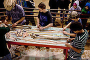 Volunteers process western diamondback rattlesnake skins during the 51st Annual Sweetwater Texas Rattlesnake Round-Up March 13, 2009 in Sweetwater, Texas. During the three-day event approximately 240,000 pounds of rattlesnake will be collected, milked and served to support charity.
