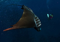 The Palau Islands are a diving paradise.