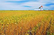 Soybean crop and oil pump jack<br /> Griffin<br /> Saskatchewan<br /> Canada