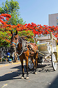 Horse and carriage, Guadalajara, Jalisco, Mexico