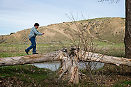 Henry Real Bird, grandson Hank, playing, at daughter Lucy graduation celebration, on old cottonwood tree, split down the middle, alongside Little Bighorn River, at Medicine Tail Coulee, site of Battle of the Little Bighorn, Crow Indian Reservation in Montana