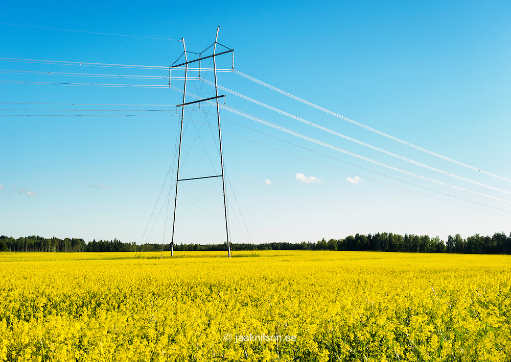 Transmission towers and power lines in yellow rape seed field in Estonia.
