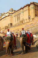 Inde, Rajasthan, Jaipur la ville rose, le fort d'Amber // India, Rajasthan, Jaipur the pink city, Amber fort
