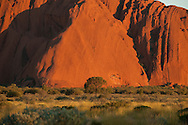 Lone tree in front of Ayers Rock