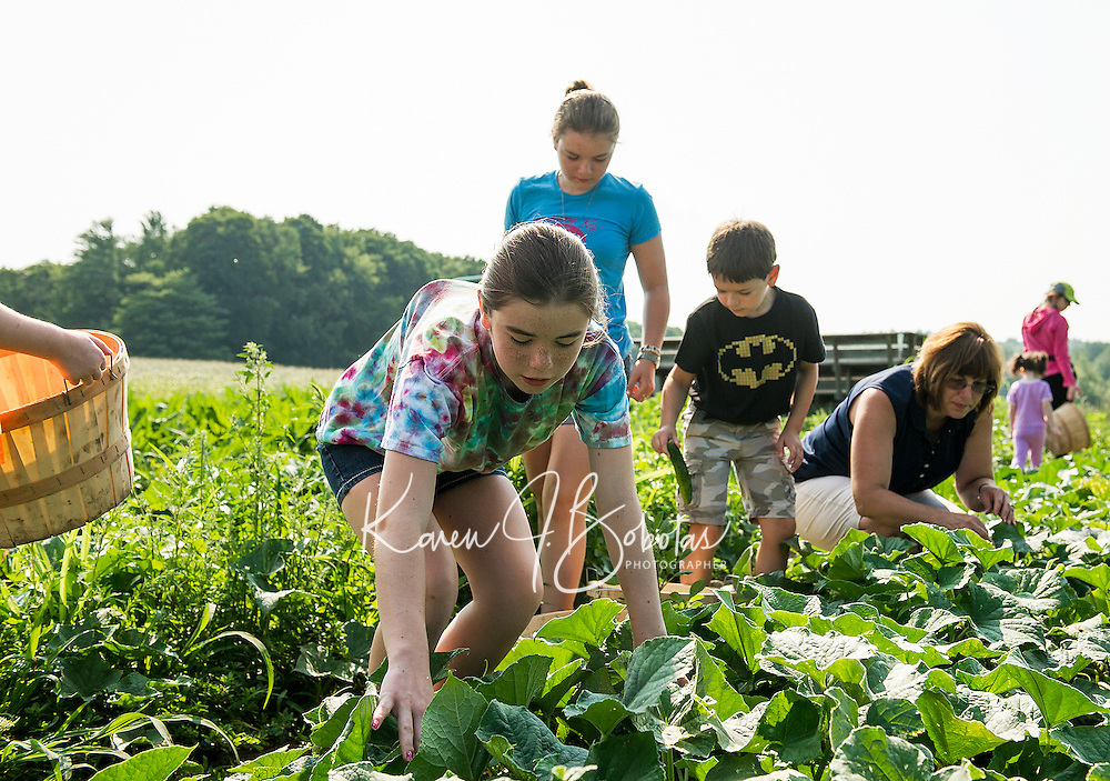 Bridget Daggett picks cucumbers along with her family Abby, Jason and Judy during Moulton Farms Little Sprouts Garden Club on Wednesday morning.  This is the Daggett family's 7th year with the Little Sprouts program.   (Karen Bobotas/for the Laconia Daily Sun)