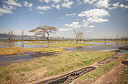 The stunning wetlands of Lake Nakuru National Park, Kenya.