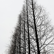 Trees in China
