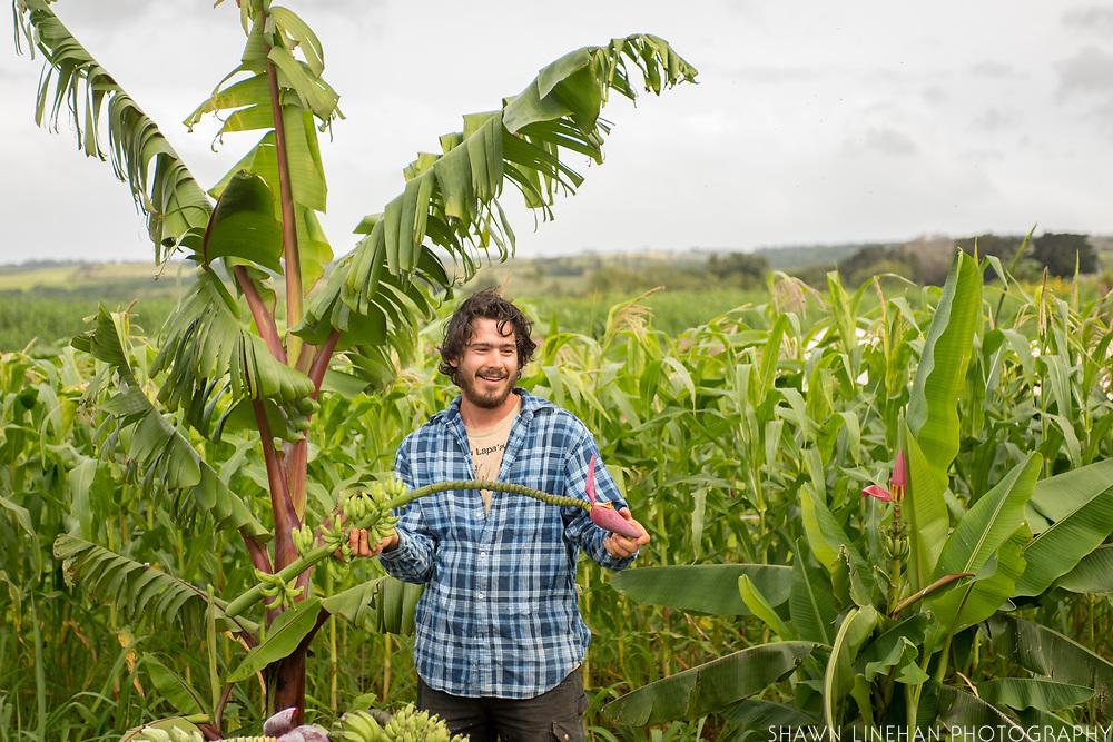 Gabriel Sachter-Smith, banana plant breeder
