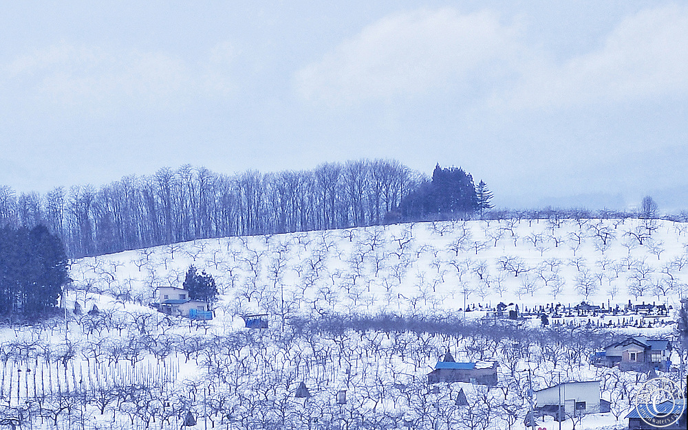 Apple farms on the foot hills of Mt.Iwakiin winter.Located in Aomori Prefecture in Northern Honshu, Japan.