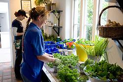 Washing freshly picked herbs at Ballymaloe Cookery school