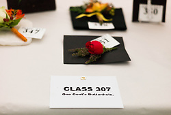 © Licensed to London News Pictures.12/08/15<br /> Danby, UK. <br /> <br /> A selection of Gent's Buttonholeflowers are displayed ahead of judging at the 155th Danby Agricultural Show in the Esk Valley in North Yorkshire. <br /> <br /> The popular agricultural show attracts competitors and visitors from all over the surrounding area to this annual showcase of country life. <br /> <br /> Photo credit : Ian Forsyth/LNP