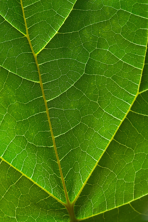 Close-up view of a leaf.