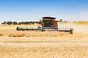 Case combine harvester cutting the last of the wheat crops as the harvest season comes to an end near Gidginbung, New South Wales, Australia