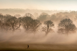 © Licensed to London News Pictures. 30/12/2019. London, UK. A walkers enjoys a wonderful misty morning in Richmond Park, London as forecasters predict unseasonably warm weather and possibly the the warmest New Year's Eve for over a 170 years. Photo credit: Alex Lentati/LNP