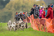 Competitor in 8 dog class during the WSA Dryland World Championship 2019 at Firle Country Estate in the South Downs National Park, Lewes, Sussex, United Kingdom on 16 November 2019.