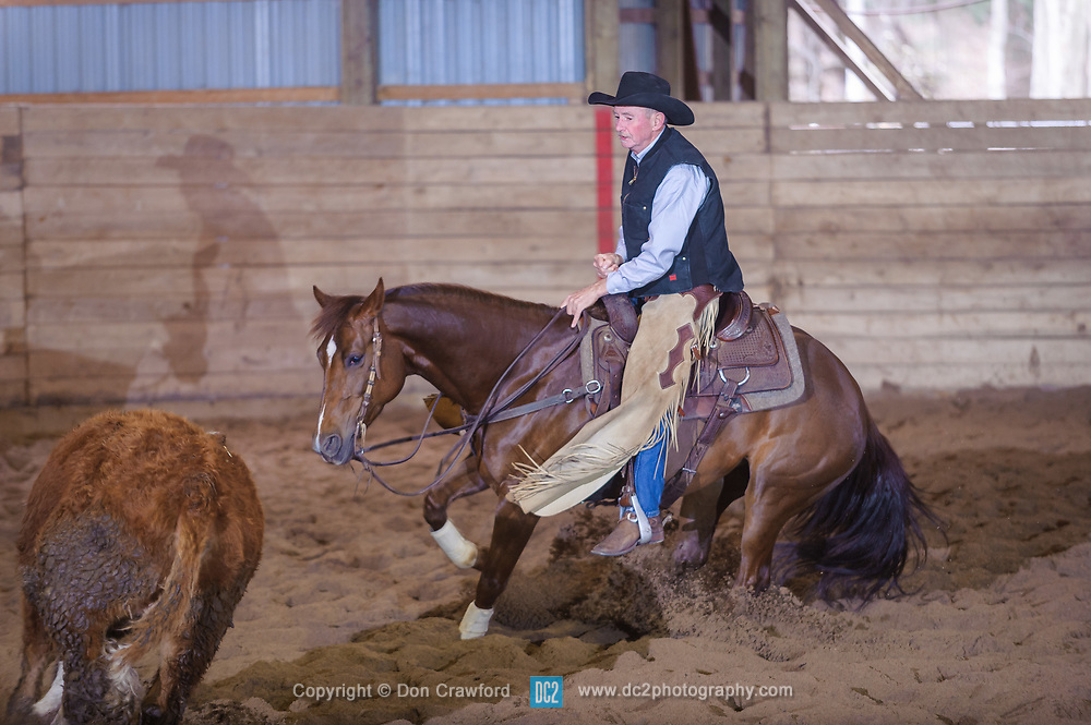 April 30 2017 - Minshall Farm Cutting 2, held at Minshall Farms, Hillsburgh Ontario. The event was put on by the Ontario Cutting Horse Association. Riding in the 5,000 Novice Horse Class is Greg Wilde on Better Moonshine owned by the rider.