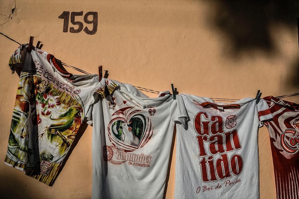 Brazil, Amazonas, Parintins. Garantido, le boeuf du peuple. La rivalite historique entre les Bœufs Garantido et Caprichoso impregne les murs et les ames. Chaque annee a la fin du mois de juin, il est imperatif de choisir son camp. Au cœur de l'Amazonie, a 400 km au sud-est de Manaus, Parintins vibre pour un evenement qui attire plusieurs dizaines de milliers de personnes venus de tout le pays : le Boi-Bumba.