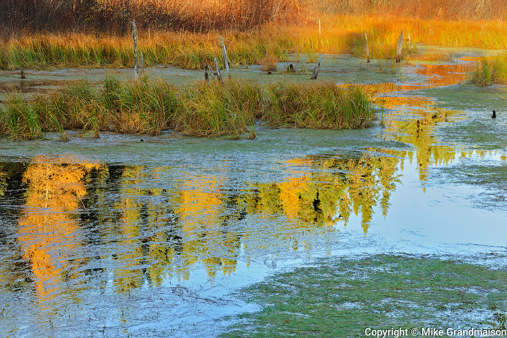 Morning light on a wetland<br /> Ear Falls<br /> Ontario<br /> Canada