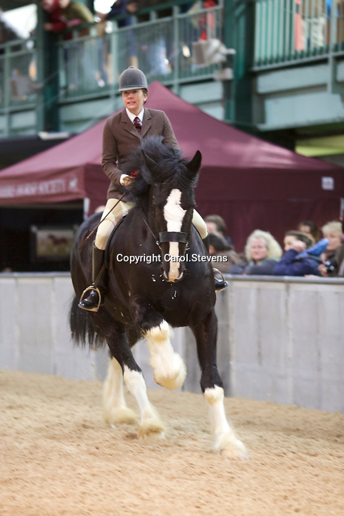 Shire Horse Society Spring Show 2017 Ridden Championships