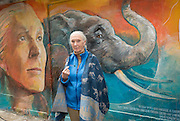 "Conservationist Dame Dr Jane Goodall, unveils a wall painting by local artist Adam Lo of her self and animals. <br /> ""Walls of Change"" street art in Hong Kong painted ahead of the The ""Hope for Wildlife"" Gala Dinner to raise awareness for the plight of endangered animals the world over.<br /> Sai Yin Pun Hong Kong<br /> 10th November 2016. Photo by Jayne Russell"