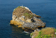Rock crowded by pelicans at Pachequilla island shore. Las Perlas archipelago, Panama province, Panama, Central America.