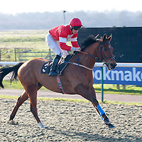Eye Of The Tiger and S W Kelly winning the 1.30 race