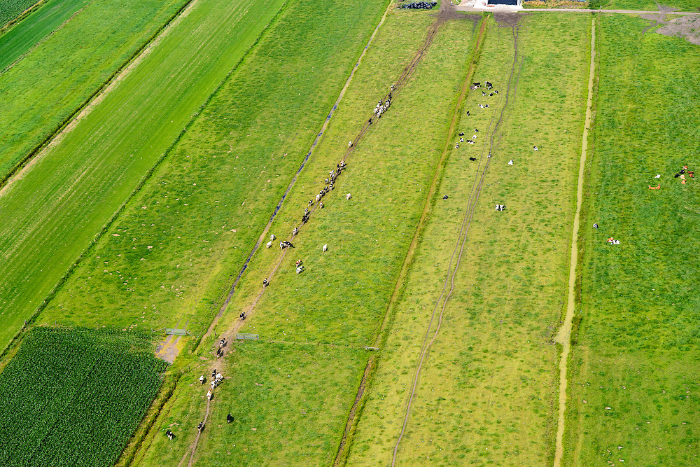 Nederland, Utrecht, Gemeente De Bilt, 26-06-2013; polder Achttienhoven, tussen Westbroek en Hollandsche Rading.<br /> Maaien van het gras. Koeien onderweg naar de boerderij rond melktijd.<br /> Cows on the way to the farm around milking hour.<br /> luchtfoto (toeslag op standaard tarieven);<br /> aerial photo (additional fee required);<br /> copyright foto/photo Siebe Swart.