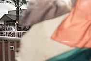 A Palestinian flag at the Al Fares horse riding club.