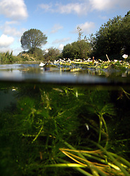 UK ENGLAND WILTSHIRE 26JUN08 - Semi-submerged photo of flora in the riverbed of the Kennet near Stichcoombe in rural Wiltshire, western England...jre/Photo by Jiri Rezac / WWF UK..© Jiri Rezac 2008..Contact: +44 (0) 7050 110 417.Mobile:  +44 (0) 7801 337 683.Office:  +44 (0) 20 8968 9635..Email:   jiri@jirirezac.com.Web:     www.jirirezac.com..© All images Jiri Rezac 2008 - All rights reserved.