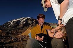 20-10-2008 REPORTAGE: KILIMANJARO CHALLENGE 2008: TANZANIA <br /> Beginnend met de Barranco Wall lopen we vandaag  naar Karanga Camp op 4040 meter. Vandaag ook de dag van de onderzoeken zoals polsgolfanalyse, bloedonderzoek en hartecho. De Kilimanjaro Challenge van de BvdGf.<br /> ©2008-FotoHoogendoorn.nl