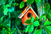 Bird House image for sale, The American birdhouse finds its roots from the Native Indians who taught the English and German immigrants moving to the east coast of the United States in the 18th century. It was a simple structure made from the bark of birch trees with a platform as a feeder. Even to this day, American Indians are making birdhouses in the same way. The birdhouse sheltered birds from storms and natural disasters. It also played an important role in breeding as well as propagation of species. Nowadays, birdhouses in the shape of tiny castles, churches and Victorian cottages are in the market as folk art.