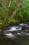 Trout Lake Creek flows through the rainforest at Sasquatch Provincial Park near Harrison Hot Springs, British Columbia, Canada