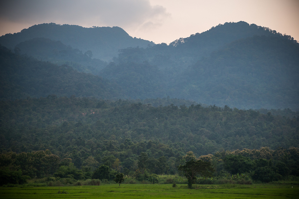 The hills and rice patties near the jungle near Chiang Mai, Thailand.