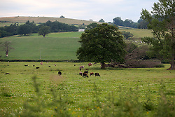 UK ENGLAND ENGLAND STOCKTON 1JUL15 - Livestock on Stockton Farm near the river Camlad on the border between England and Wales in the river Severn catchment area.<br /> <br /> jre/Photo by Jiri Rezac / WWF UK<br /> <br /> © Jiri Rezac 2015