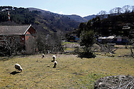Landscape in the village of Lazarim, central Portugal on February 17, 2015. PAULO CUNHA /4SEE