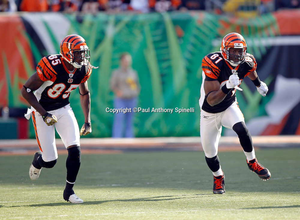 Cincinnati Bengals wide receiver Chad Ochocinco (85) and wide receiver Terrell Owens (81) go out for a pass during the NFL week 8 football game against the Miami Dolphins on Sunday, October 31, 2010 in Cincinnati, Ohio. The Dolphins won the game 22-14. (©Paul Anthony Spinelli)